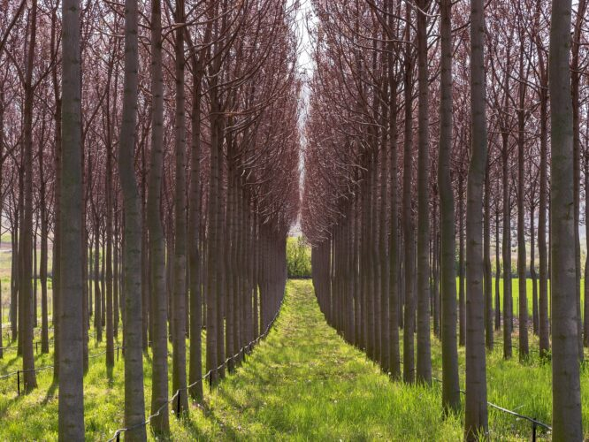 Giornata Mondiale dell'Ambiente: Adriatica Oli pianta 50 alberi